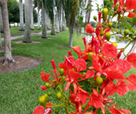 Red flowers blooming next to palm trees
